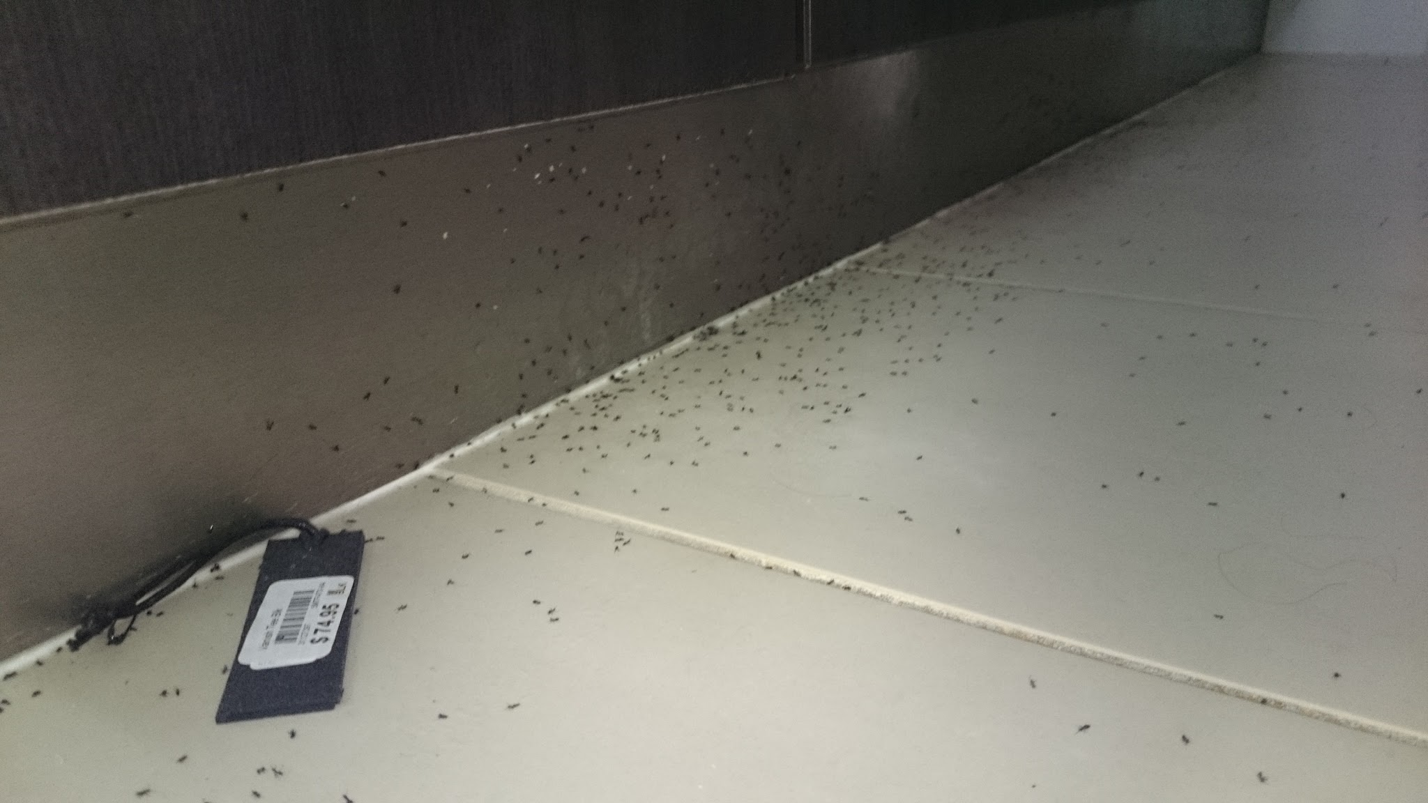 this client had some ants coming through the bathroom widow, but the ants were hiding under the cabinettes kickboards to get out of the rain