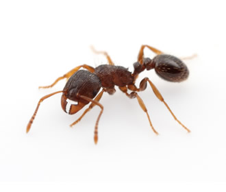 Ant Issue Dirt Cheap Carpet Cleaning And Pest Control