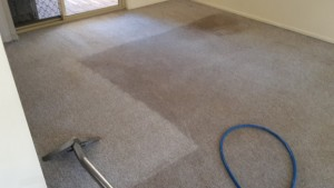 carpet cleaning border-line restoration