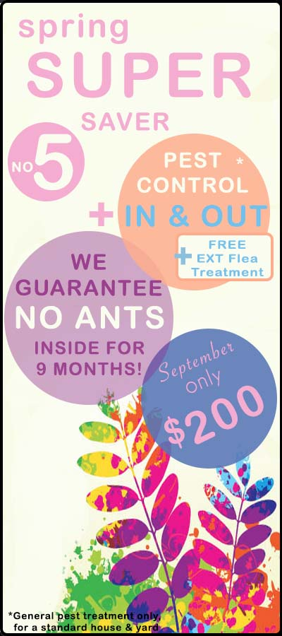 SPRING ANT pest control deal